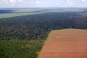 Brazil is shortly to overtake the US as the world's largest exporter of soybeans, much of which are grown on cleared forest land. The FIFA initiative will help to reverse such trends